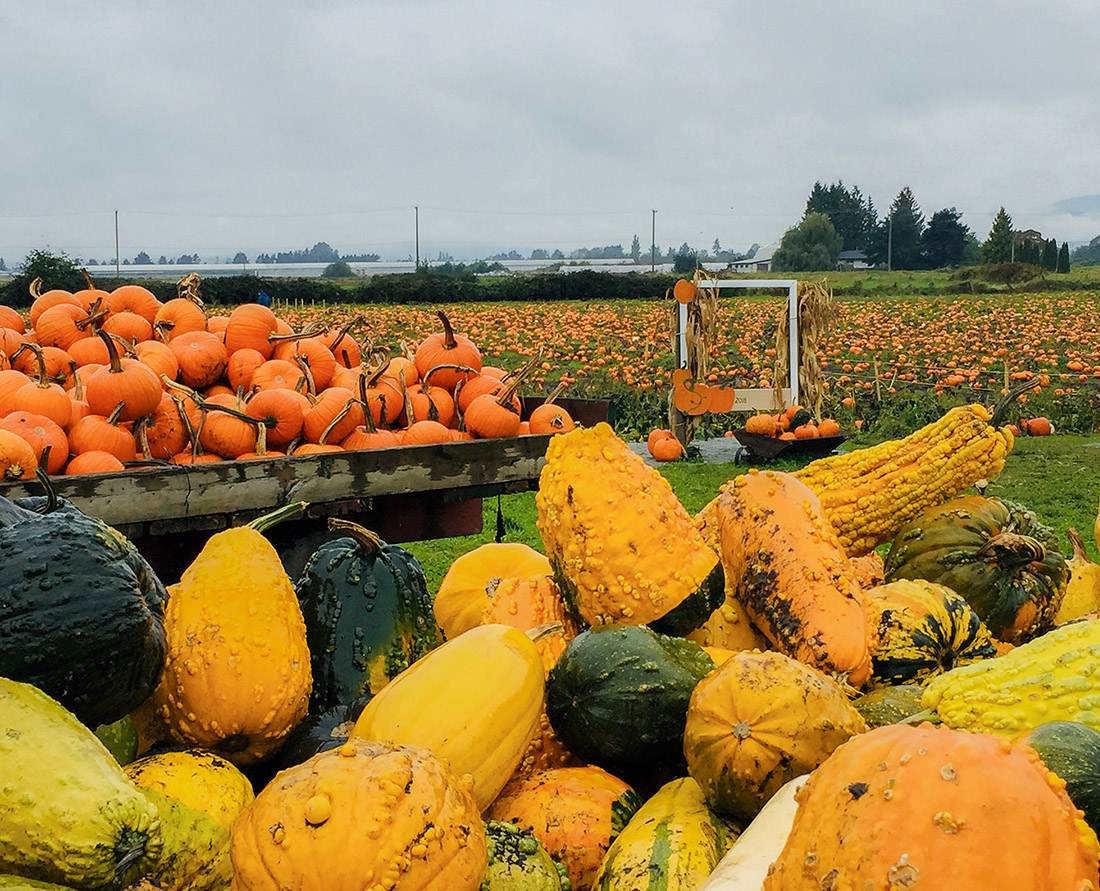 A visit to Laity Pumpkin Patch North, Maple Ridge. Pumpkin Patch Guide to Metro Vancouver. Photo Credit: Wendy Nordvik-Carr©